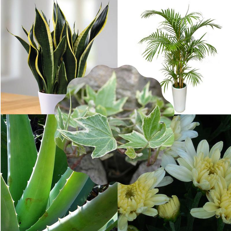 Top 5 luchtzuiverende planten voor in je slaapkamer die je helpen beter te slapen!